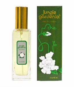 Perfume Gift For Graduates