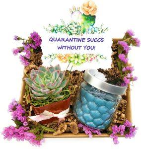 Quarantine Succulent & Candle Gift Basket